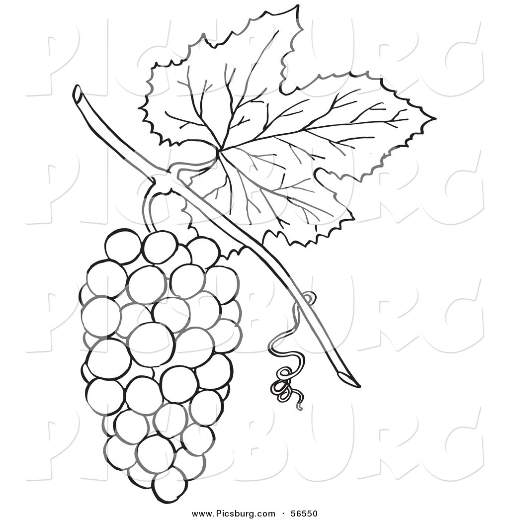 Clip Art Of A Coloring Page Bunch Grapes With Leaf