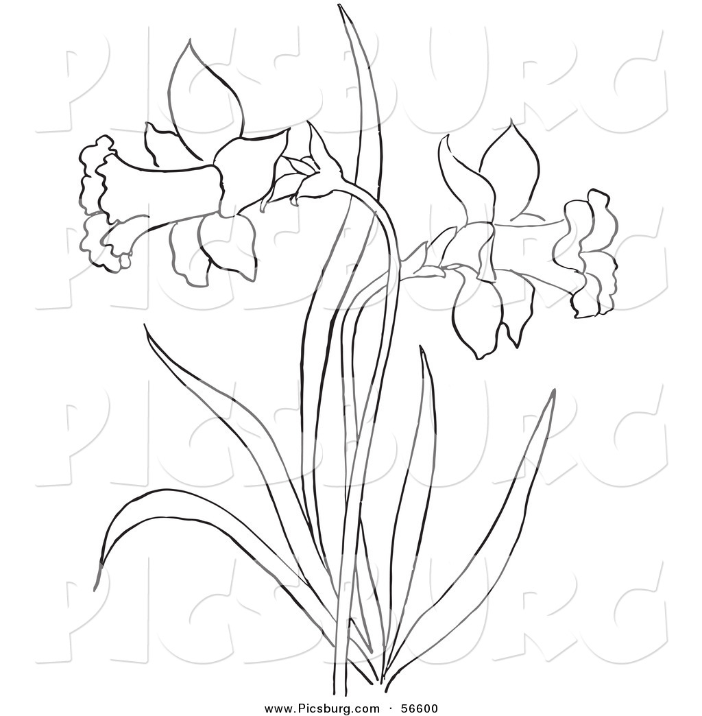 Clip Art of a Coloring Page of a Dandelion Flower Plant by