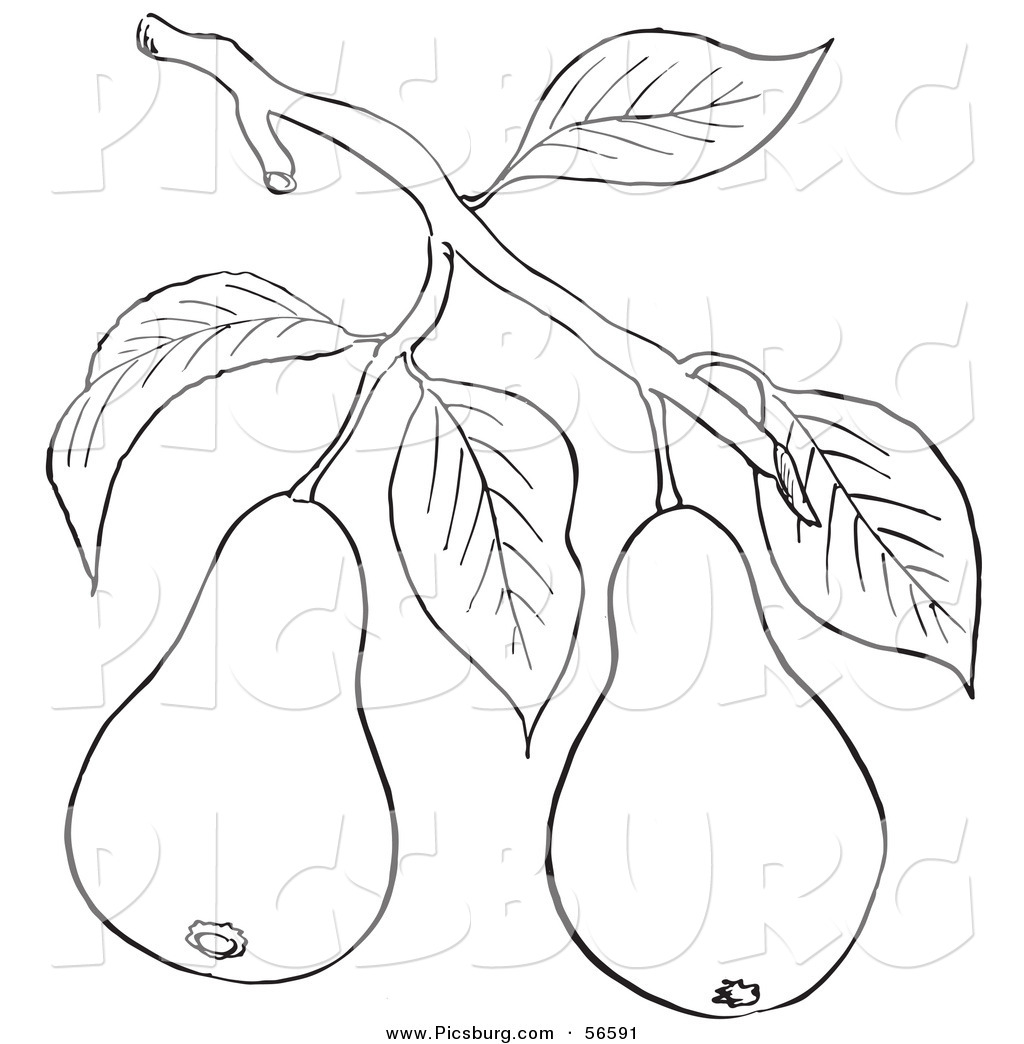 Coloring sheets of fruit trees - Coloring Page Of A Pear Tree Branch With Fruits