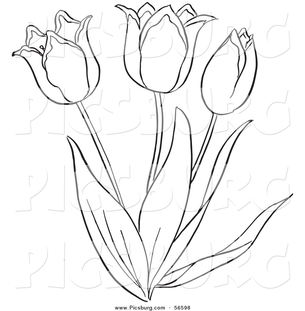 Flowering Plant Drawing of a Tulip Flower Plant