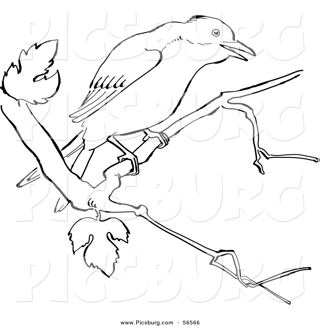 clip art of a mockingbird on a tree branch black and white line