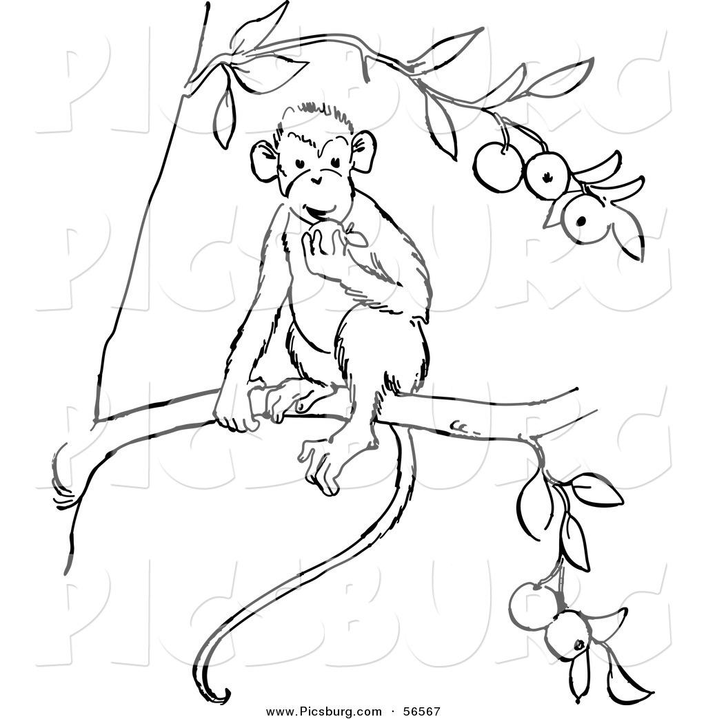 Line Art Monkey : Monkey coloring page