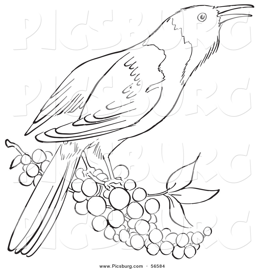 Royalty Free Bird Stock Designs