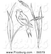 Clip Art of a Bobolink Bird Chirping on Wheat Grass - Black and White Line Art by Picsburg