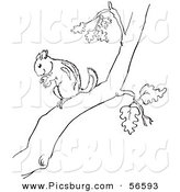 Clip Art of a Chipmunk with a Nut on a Tree Branch - Black and White Line Art by Picsburg