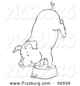 Clip Art of a Circus Pig Doing Handstand on a Metal Pot - Black and White Line Art by Picsburg