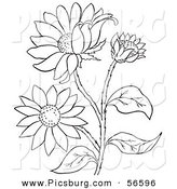 Clip Art of a Coloring Page of a Black Eyed Susan Flower Plant by Picsburg