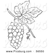 Clip Art of a Coloring Page of a Bunch of Grapes with a Leaf by Picsburg