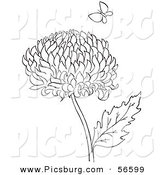 Clip Art of a Coloring Page of a Chrysanthemum Flower and Butterfly by Picsburg