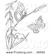 Clip Art of a Coloring Page of a Plant with Butterflies by Picsburg