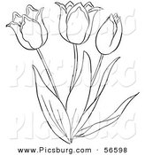 Clip Art of a Coloring Page of a Tulip Flower Plant by Picsburg