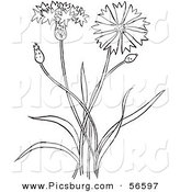Clip Art of a Coloring Page Outline of a Bachelors Buttons Flower Plant by Picsburg