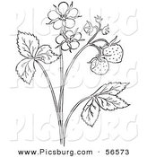 Clip Art of a Coloring Page Outline of a Strawberry Plant with Blossoms by Picsburg