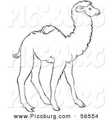 Clip Art of a Cute Baby Camel Standing - Black and White Line Art by Picsburg