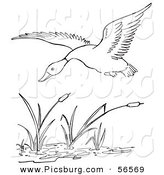 Clip Art of a Duck Flying over a Pond - Black and White Line Art by Picsburg