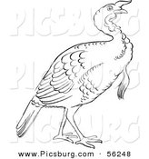 Clip Art of a Gobbler Thanksgiving Turkey Bird - Black and White Line Art by Picsburg