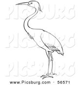 Clip Art of a Heron Bird Standing on Ground - Black and White Line Art by Picsburg