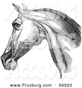 Clip Art of a Horse Head Highlighting Neck Muscles - Black and White Version #1 by Picsburg