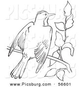 Clip Art of a Kingbird with Open Wings on a Tree Branch - Black and White Line Art by Picsburg