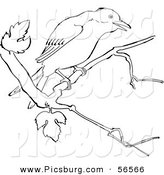 Clip Art of a Mockingbird on a Tree Branch - Black and White Line Art by Picsburg