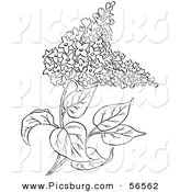 Clip Art of a Outlined Lilac Flower Plant on White by Picsburg