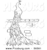 Clip Art of a Peacock Standing on a Brick Wall - Black and White Line Art by Picsburg