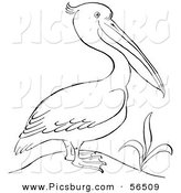 Clip Art of a Pelican Standing Beside a Plant - Black and White Line Art by Picsburg