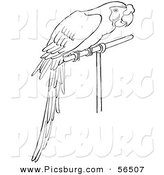 Clip Art of a Perched Parrot in a Caged Environment - Black and White Line Art by Picsburg