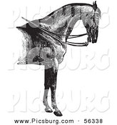 Clip Art of a Reined Horse with Good Strong Shoulders - Black and White Vector Graphic by Picsburg