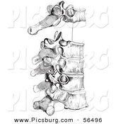 Clip Art of a Retro Drawing of the Peculiar Dorsal Thoracic Vertebrae in Black and White by Picsburg