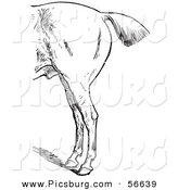 Clip Art of a Retro Old Fashioned Engraved Horse Anatomy of Bad Hind Quarters in Black and White by Picsburg