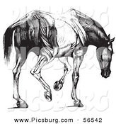 Clip Art of a Retro Vintage Engraved Horse Anatomy of Muscular Covering Butt View in Black and White by Picsburg