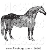 Clip Art of a Retro Vintage Engraved Horse in Black and White on White by Picsburg