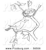 Clip Art of a Robin Resting on a Branch by Her Nest with Eggs - Black and White Line Art by Picsburg