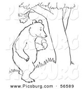 Clip Art of a Standing Bear with Apples Beside a Tree - Black and White Line Art by Picsburg