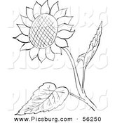 Clip Art of a Sunflower and Leaves - Black and White Line Art by Picsburg