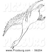Clip Art of a Swan Descending in Flight - Black and White Line Art by Picsburg