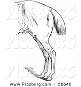 Clip Art of a Vintage Engraved Horse Anatomy of Bad Hind Quarters in Black and White over a White Background by Picsburg