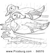 Clip Art of a Wood Duck Couple Swimming in a Pond - Black and White Line Art by Picsburg