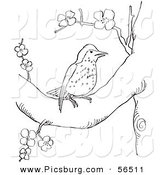 Clip Art of a Wood Thrush Resting in a Blossoming Tree - Black and White Line Art by Picsburg