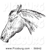 Clip Art of an Old Fashioned Vintage Engraved Horse Anatomy of a Bad Head in Black and White 1 by Picsburg