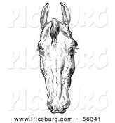 Clip Art of an Old Fashioned Vintage Engraved Horse Anatomy of a Bad Head in Black and White 2 by Picsburg