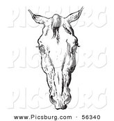 Clip Art of an Old Fashioned Vintage Engraved Horse Anatomy of a Bad Head in Black and White 3 by Picsburg