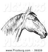 Clip Art of an Old Fashioned Vintage Engraved Horse Anatomy of a Bad Head in Black and White 4 by Picsburg