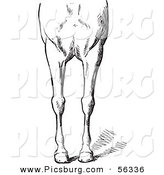 Clip Art of an Old Fashioned Vintage Engraved Horse Anatomy of Bad Conformations of the Fore Quarters in Black and White 3 by Picsburg