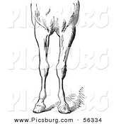 Clip Art of an Old Fashioned Vintage Engraved Horse Anatomy of Bad Conformations of the Fore Quarters in Black and White 5 by Picsburg