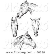 Clip Art of an Old Fashioned Vintage Engraved Horse Anatomy of Bad Heads in Black and White by Picsburg