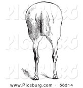 Clip Art of an Old Fashioned Vintage Engraved Horse Anatomy of Bad Hind Quarters in Black and White 7 by Picsburg