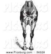 Clip Art of an Old Fashioned Vintage Engraved Horse Anatomy of Good Breast and Limbs in Black and White by Picsburg