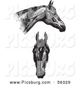 Clip Art of an Old Fashioned Vintage Engraved Horse Anatomy of Good Heads in Black and White by Picsburg